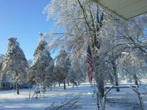 Ice Storm - Trees